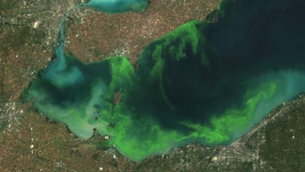 satellite algae