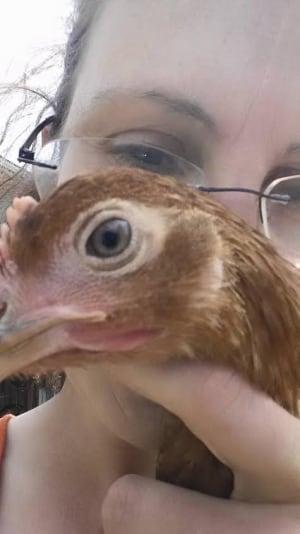 kelligrews chickens