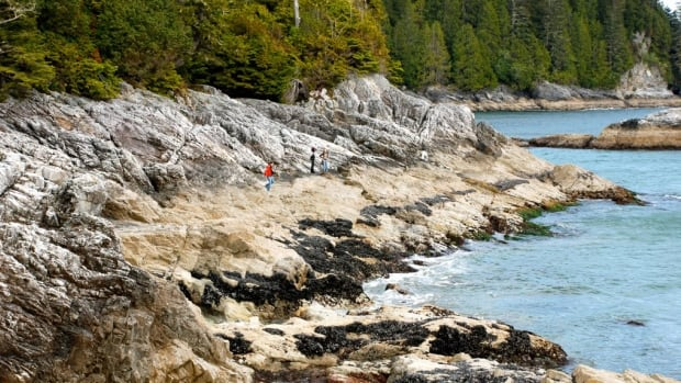 Susan Bloom purchased Stubbs Island (since renamed Clayoquot Island) in 1990. Now that she has donated the majority of land to the Nature Conservancy of Canada, the forest will be protected in perpetuity.