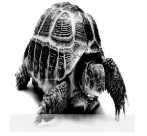 Treasury Board of Canada turtle