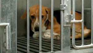 Animal testing PETA