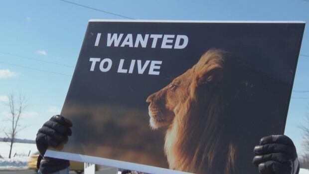 Lion protest