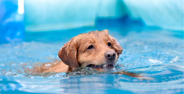 Puppy hydrotherapy