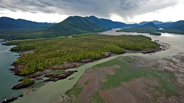Lelu Island is located at the mouth of the Skeena River, which is B.C.'s second largest salmon bearing river.