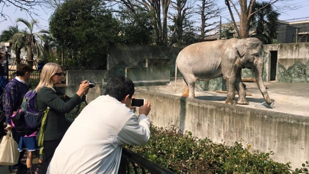 Hanako is 69 years old. The average life span of a wild elephant is 60 to 70 years.