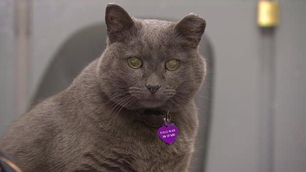 Meet Yuki, the Brandt Centre cat in Regina.