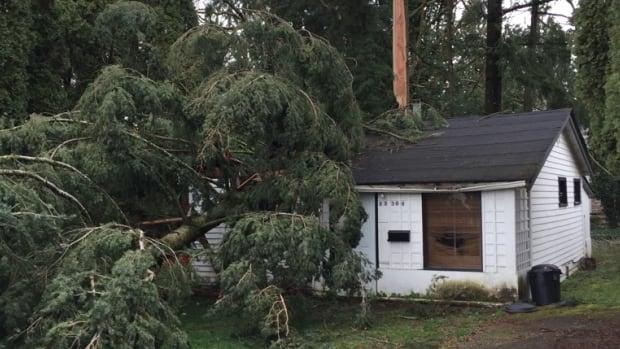Sam Bridge's home was destroyed when a tree fell on it during a windstorm.