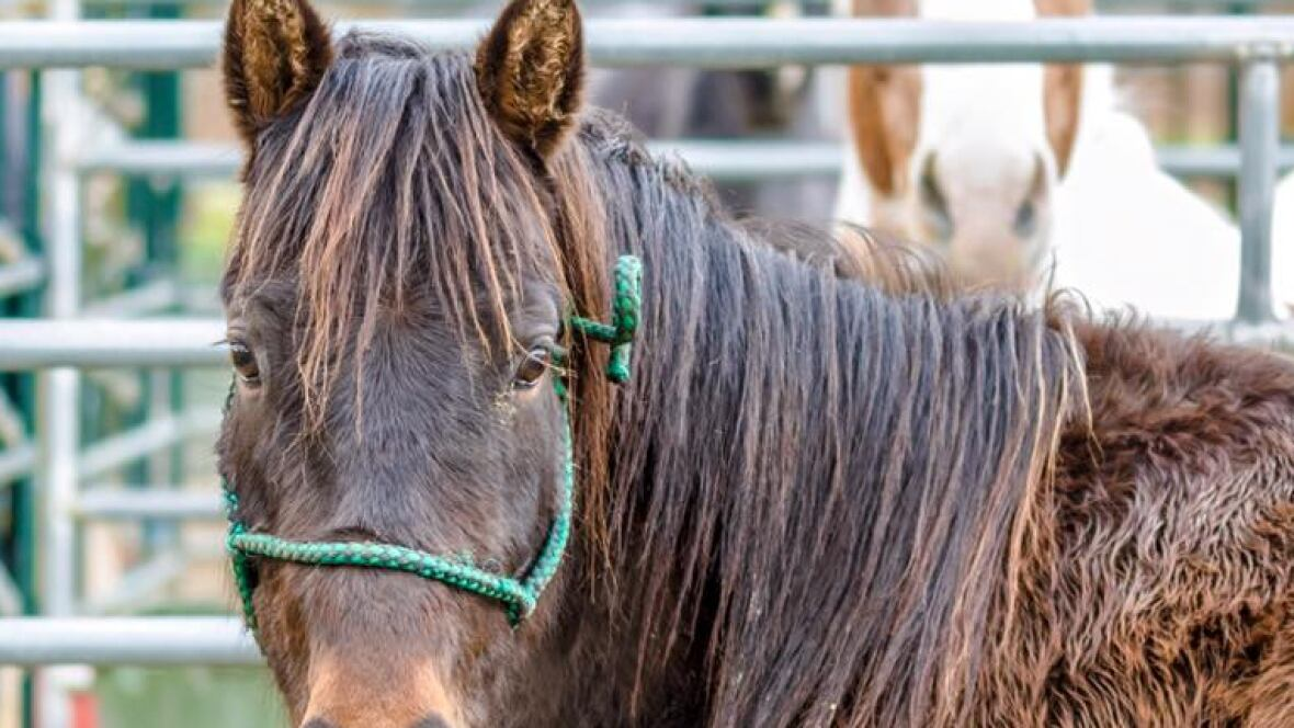 Vancouver's Southlands Riding Club Closed After Strangles ...
