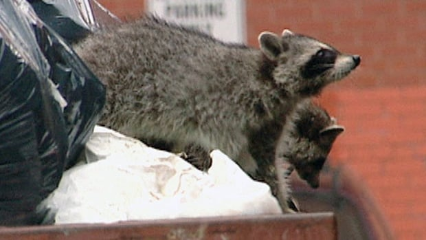A Toronto pest expert says critters all across the city are giving birth earlier than normal this year due to the mild winter.