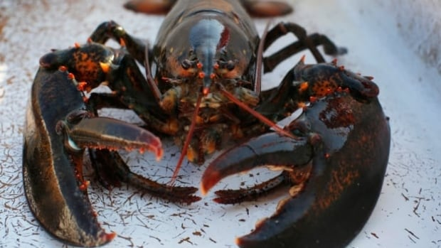 A call by Sweden to halt the importation of live North American lobsters into the European Union has got the attention of the PEI Fishermen's Association.