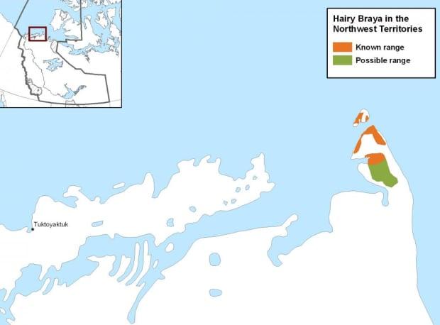 Hairy Braya map