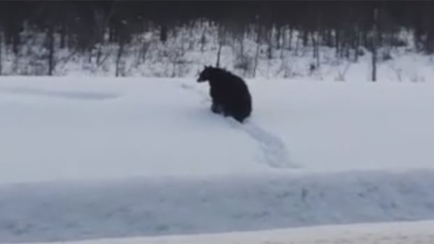 George Bugghins was driving from Yellowknife to Hay River when he saw this bear crossing Highway 3 north of Fort Providence.