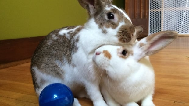 Rabbits are a social animal, but they don't like being held.