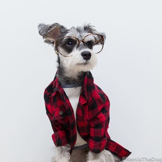 remix-the-dog