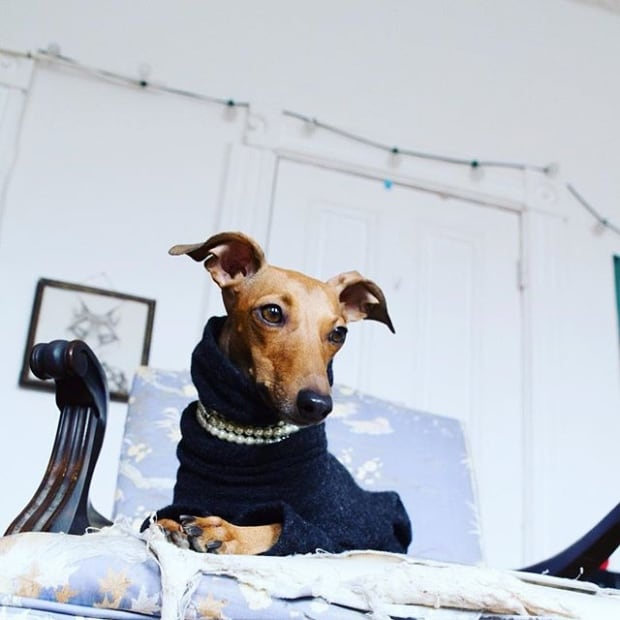 iggy-the-dog