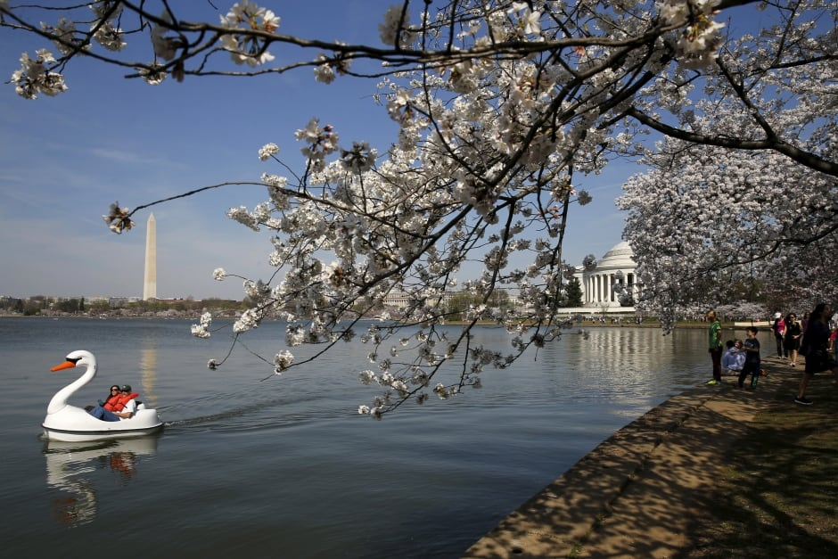 USA-DISTRICTOFCOLUMBIA/CHERRYBLOSSOMS