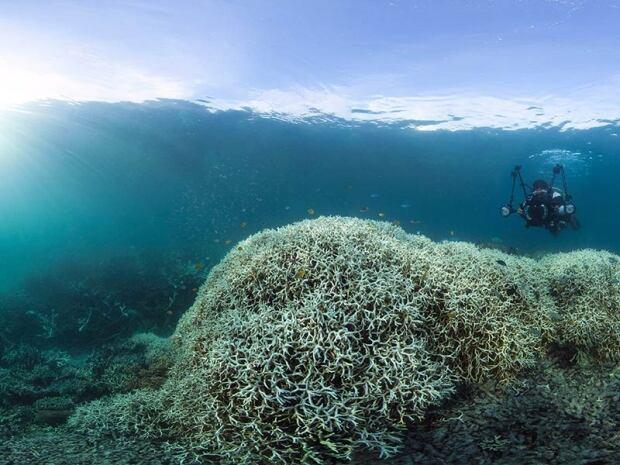 Lizard Island coral bleaching