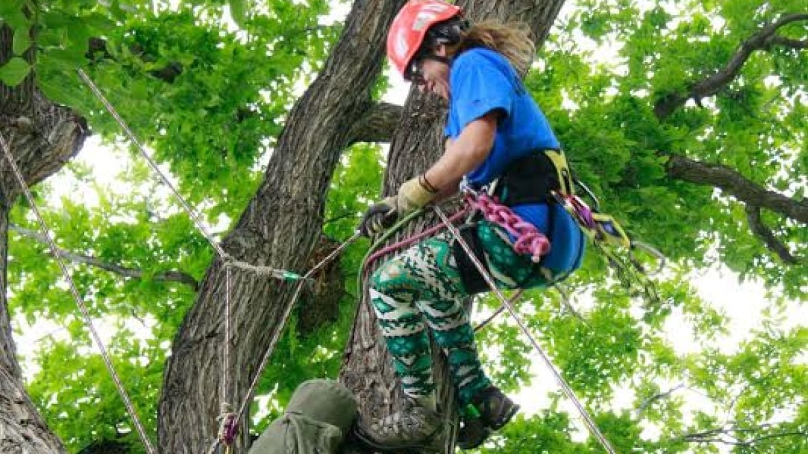 how to become an arborist in canada