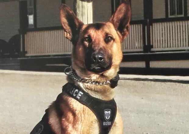 Police Dog Training Calgary