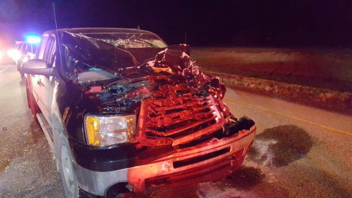 Truck Collides With Moose North Of Warman Sask Saturday
