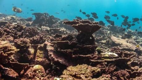 Coral Death