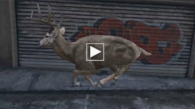 316 deer w play button