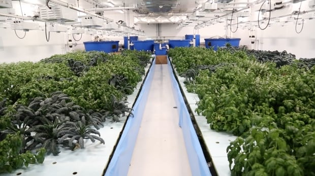 how to grow produce and distribute tobacco in canada