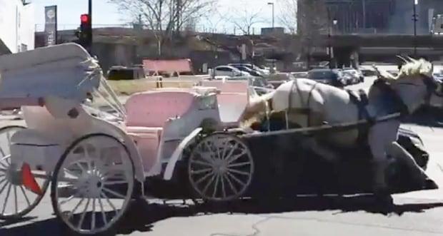 Caleche horse hit
