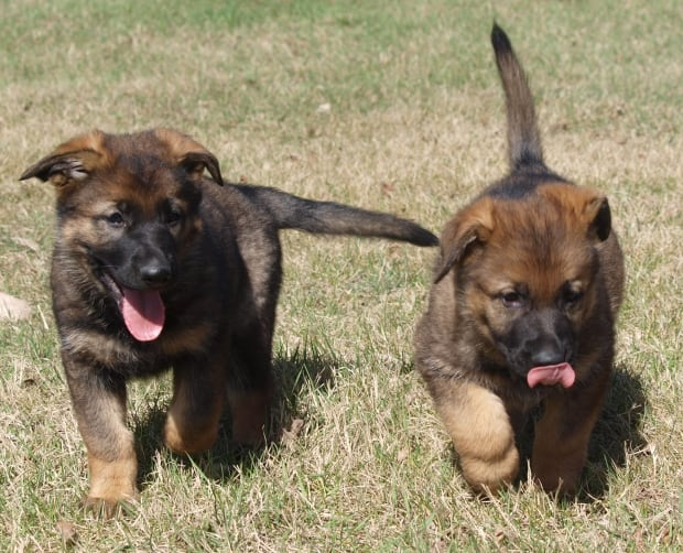 how to become a service dog trainer in canada