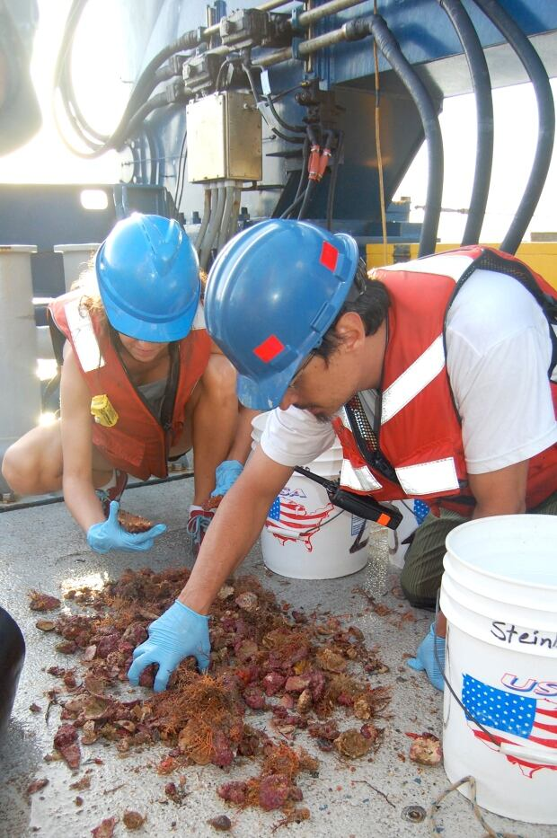 Coral samples
