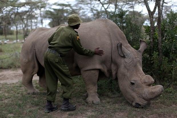 KENYA-WILDLIFE/