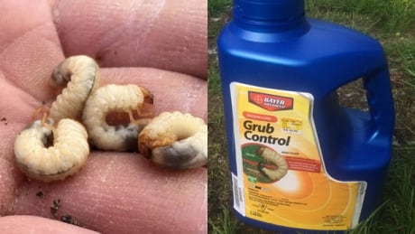 Bee-killing pesticides promoted to kill chafer beetles