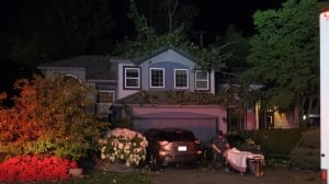 Port Coquitlam man injured by city tree falling through roof