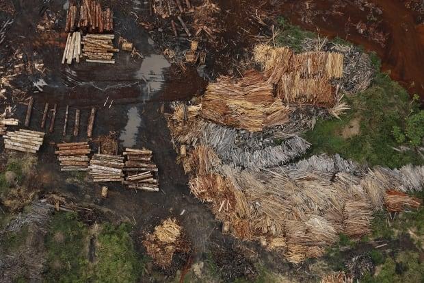 CLIMATECHANGE-SUMMIT/EARTHPRINTS-BRAZIL