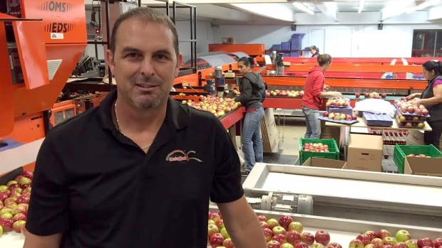 Stéphane Cataphard is among a growing number of Quebec apple growers turning to insect pheromones to stave off infestations and cutting back on harmful pesticides.