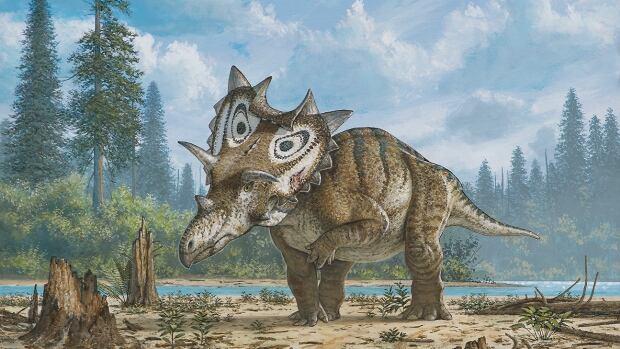 Judith horned dinosaur