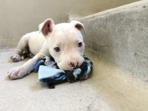 Adopted Dog Winnipeg
