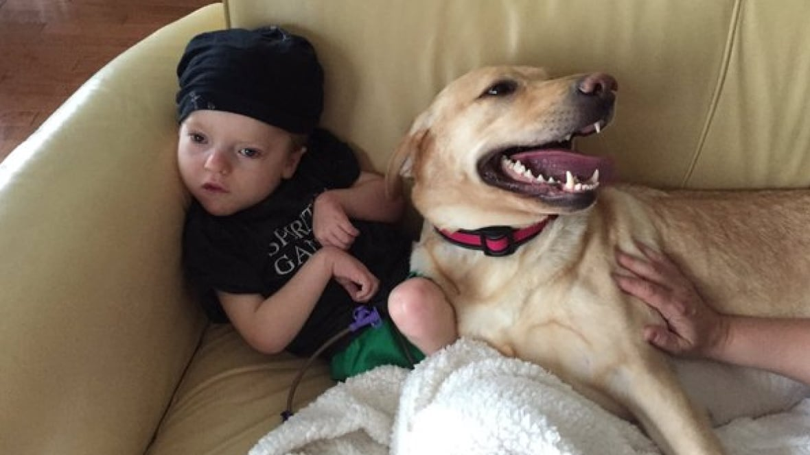 Bedford family reunited with missing service dog - CBC.ca