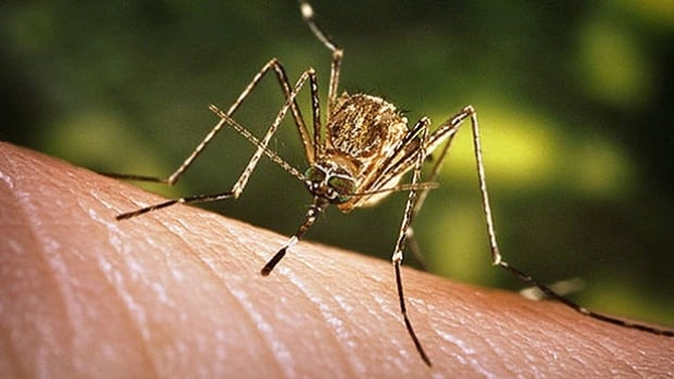 MS confirms first case of West Nile Virus in 2016