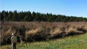 Burns Bog Conservation Society fights rezoning proposal