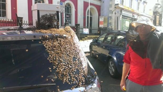 UK beekeeper swarm
