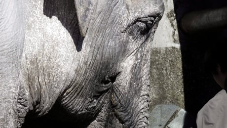 Death of 69-year-old elephant at Tokyo zoo troubles Vancouver blogger