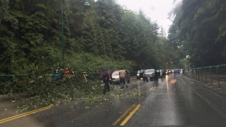 Crews clear downed tree blocking Lion's Gate bridge causeway