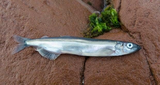 Dead fish 4