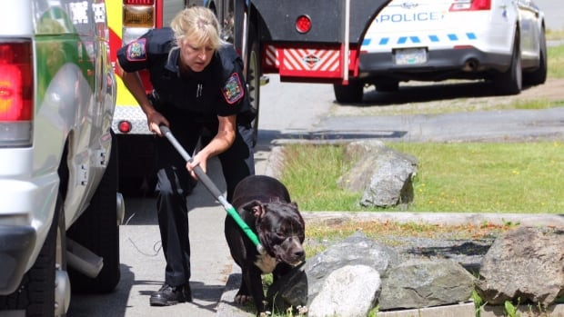 An animal control officer takes away one of at least two pit bull-type dogs near a home on Loughren Drive in Surrey, B.C.