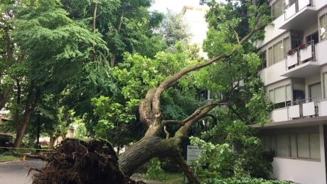 Tree falls on apartment buildings in Vancouver's West End
