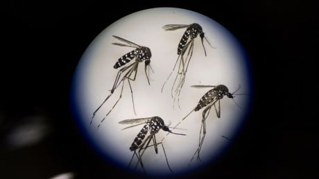 Florida reports 1st locally transmitted cases of Zika