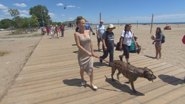 Judge temporarily suspends Montreal pit bull ban