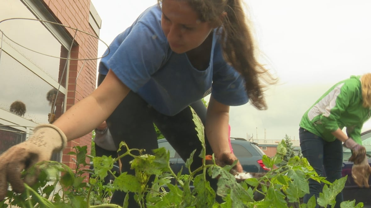 Upei Garden Will Help Feed Soup For The Soul Prince