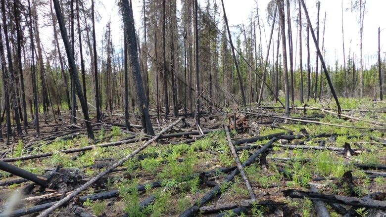 Research papers on forest fires